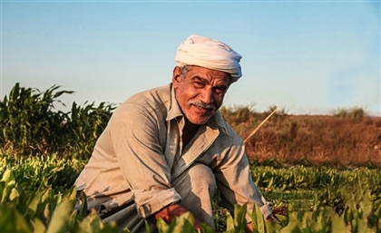 UN Tags Upper Egypt Development Program for Best Sustainable Practices