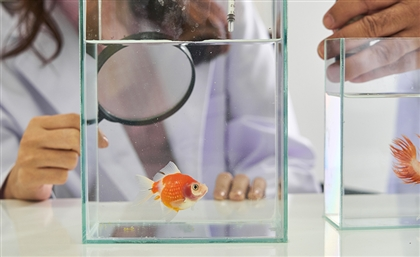 Badr University in Cairo to Open First Fish Care Lab in Middle East