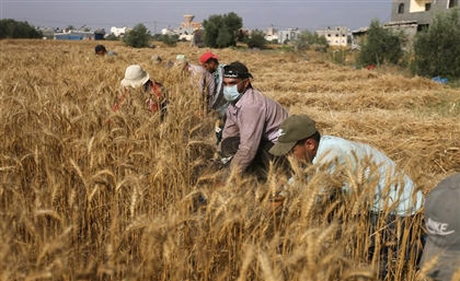 Egypt Elected Member of Committee on World Food Security